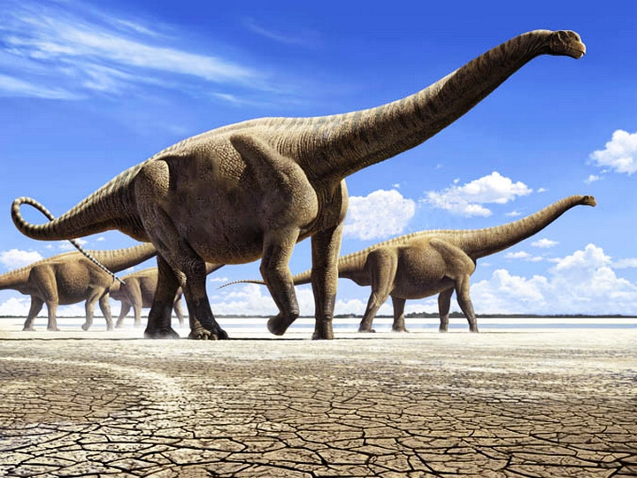 Самый крупный динозавр